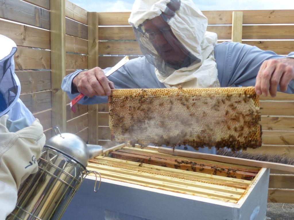 Photo d'installation de ruches sur le toit de la mairie