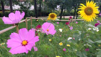 Photo du labyrinthe fleuri